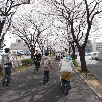 100409sakura4.jpg